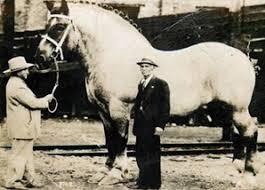caballo_grande