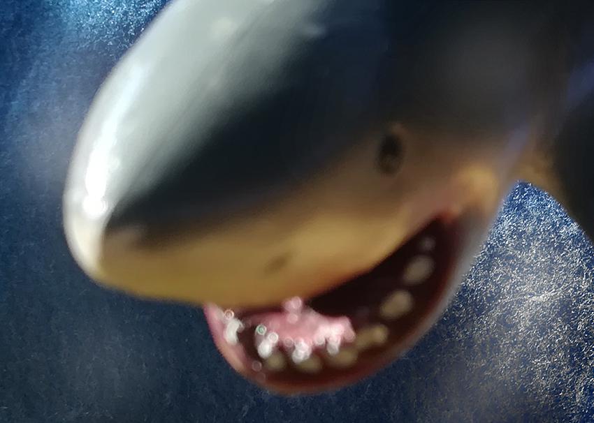 3_cabeza_tiburon